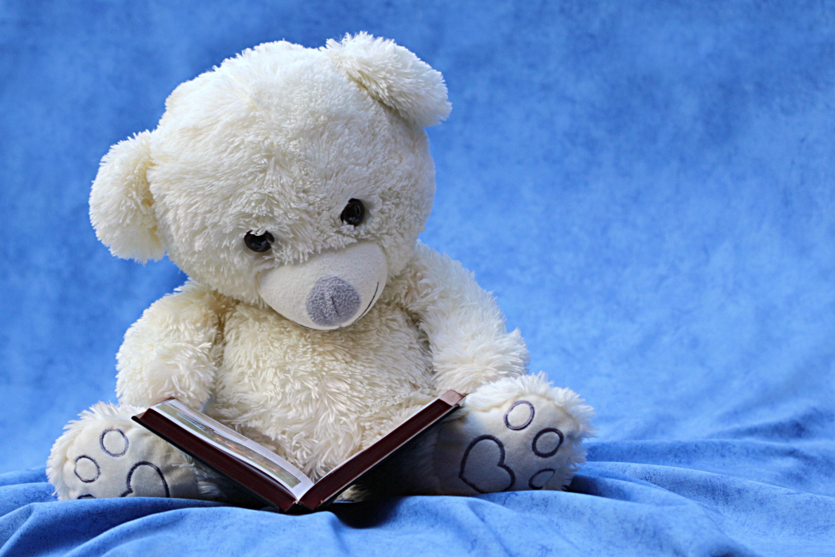 http://fuldatal-schule.de/wp-content/uploads/2018/03/still-life-teddy-white-read.jpg